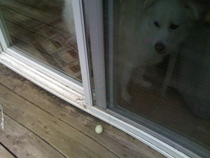 Chicken egg by the door