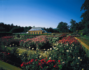 Biltmore Conservatory Rosegarden