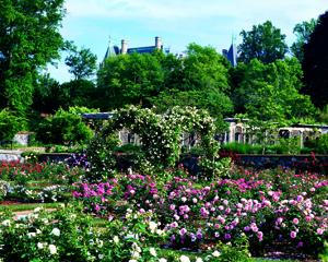 Biltmore Rose Garden Trellis