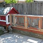 Build a chicken coop Photo: Allan Hack