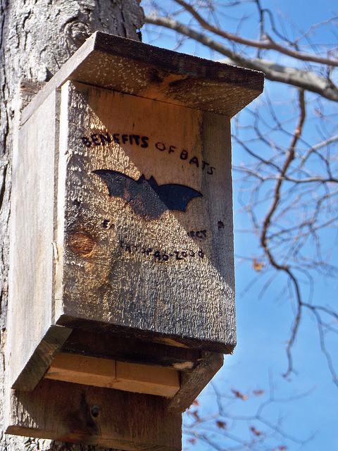 Bat house Photo: jeffesp0
