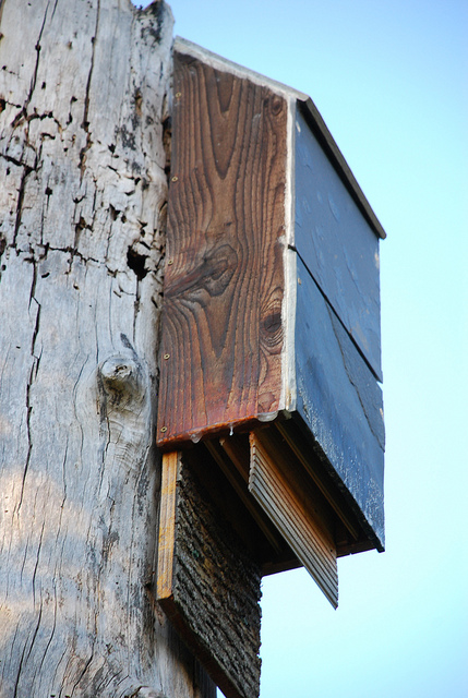 Bat House, Photo: yaquina