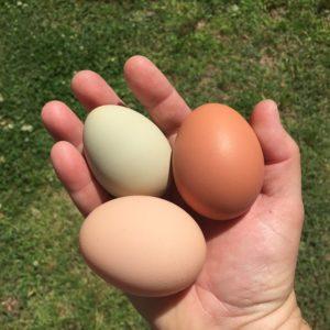 Chicken Eggs - Photo: lsbbohn