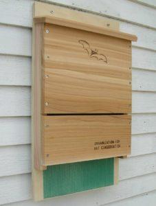 Looker Songbird Essentials Organization for Bat Conservation