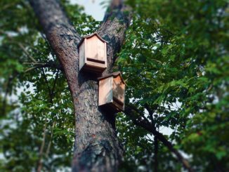Bat Boxes Photo Deedster