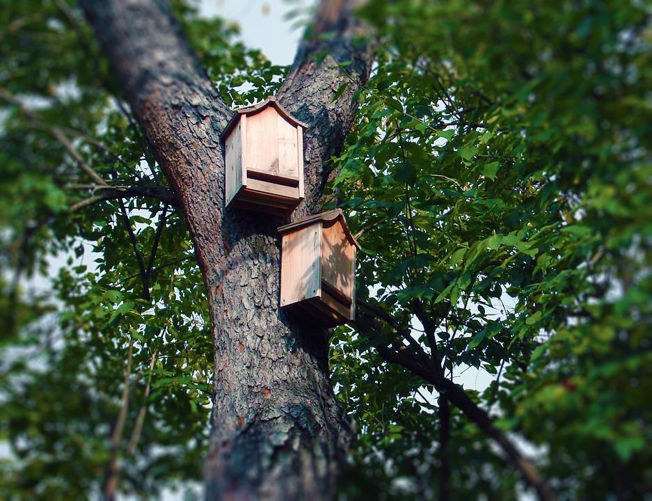 Bat Boxes Photo Deedster