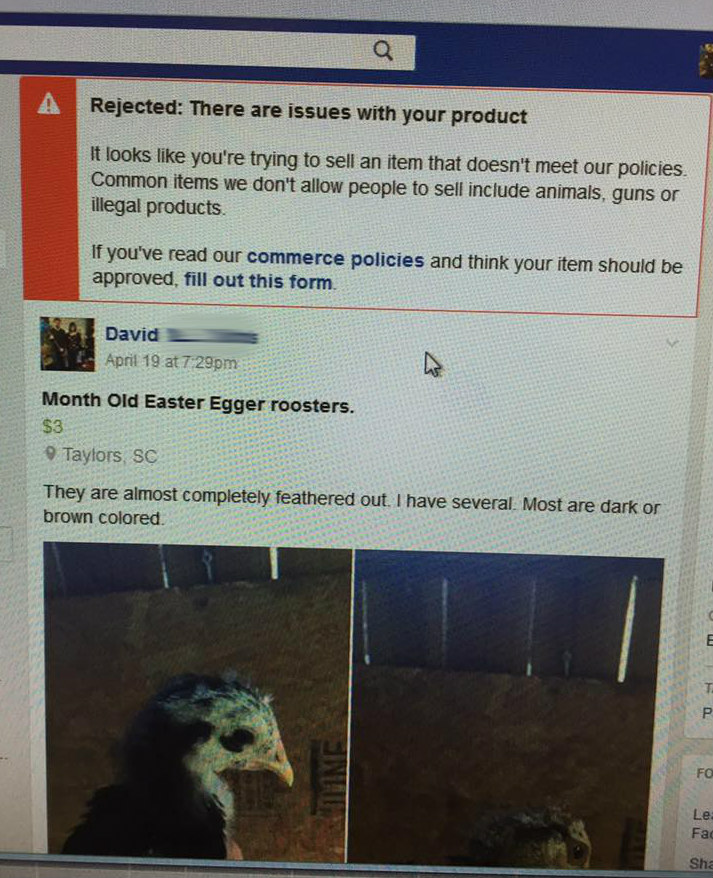 Facebook Ban on selling animals.